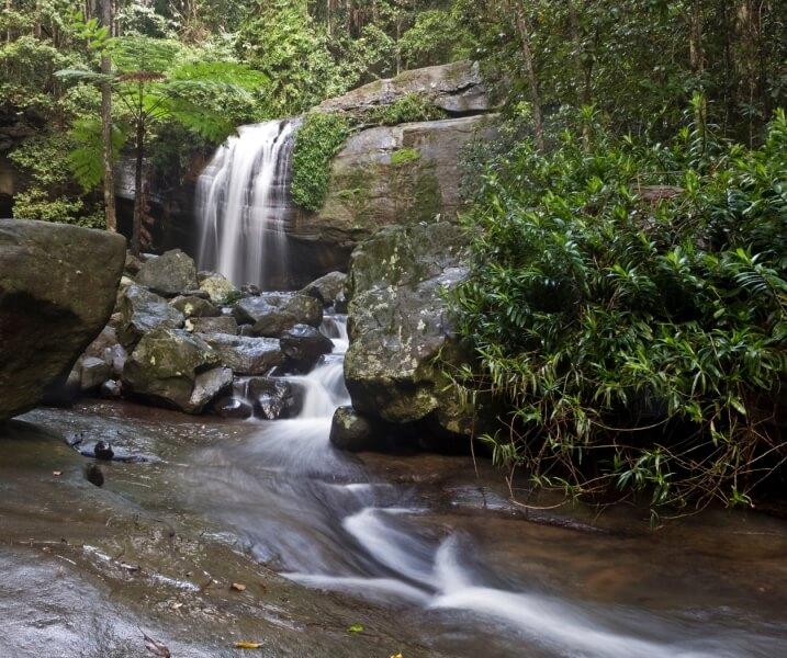 Merit For Buderim Falls By Michael Mitchell