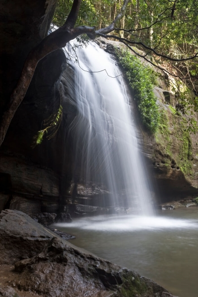 Merit For Under Buderim Falls By Michael Mitchell