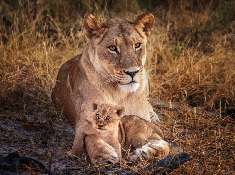 Honour For A Proud Mum By Geoffrey Hui