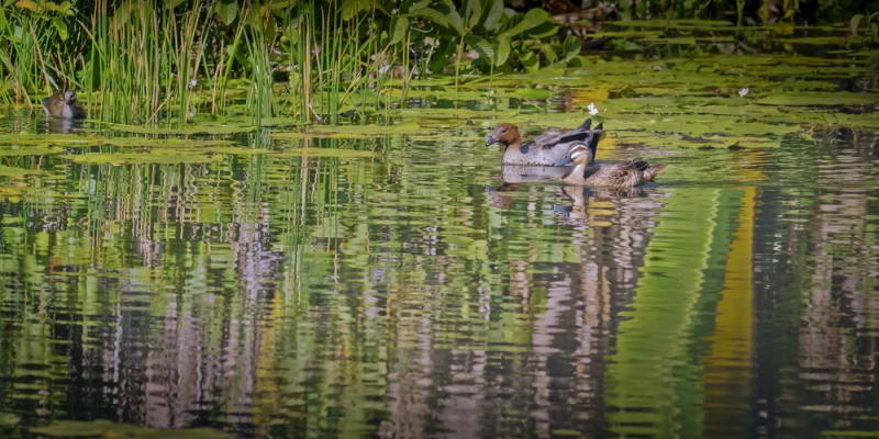 Merit For Wetland Reflections By Margaret Yeo