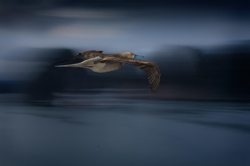 Merit For Flying Bird By Sam Fernando