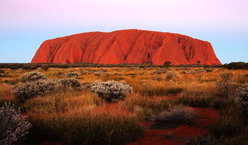 Honour For Uluru With White Bushes By Ann Smallegange
