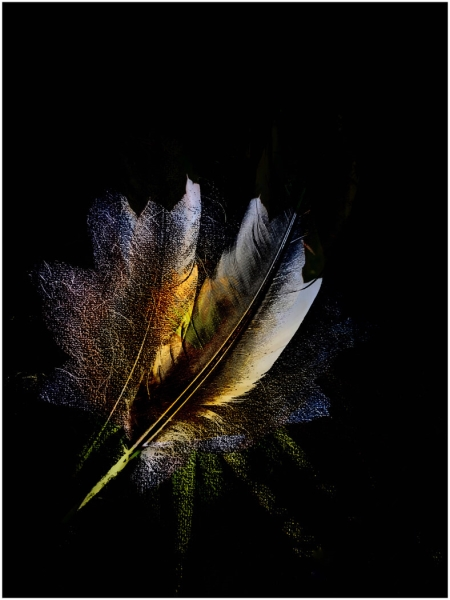 Merit For Feathers And Flowers By Denise McMillan