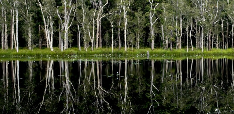 Honour For Urunga Wetlands By Margaret Duncan