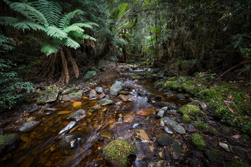 Merit For Guthries Creek By Nadia Filiaggi