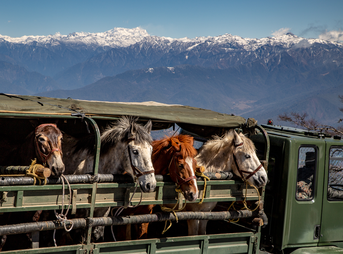 Merit For Himalayas And Horses By Lekha Suraweera