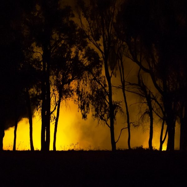 Merit For Bushfire Light By Sue Gordon