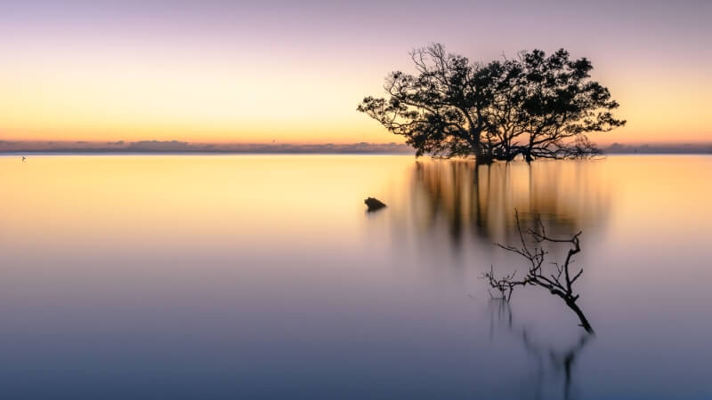 Merit For Mangrove Morning By Ian Sweetman