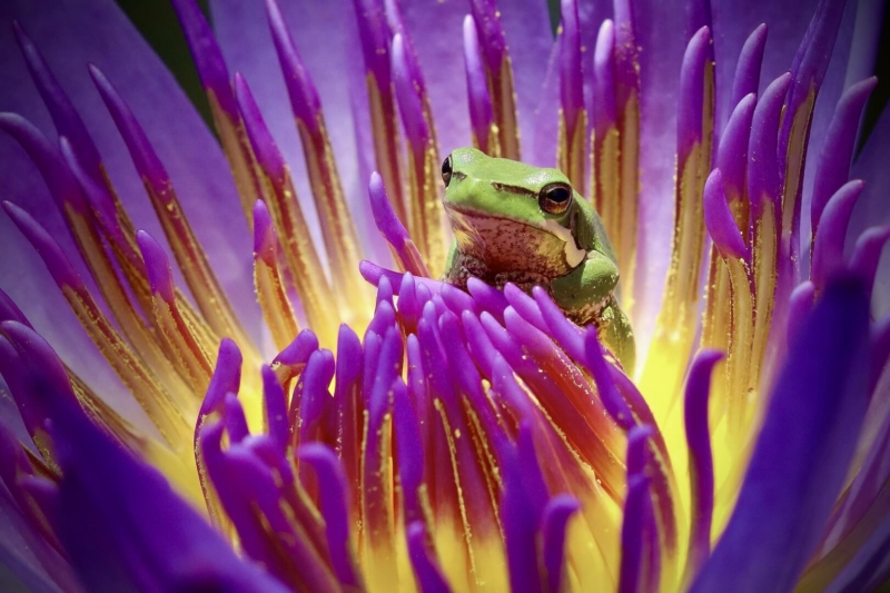 Honour For AB121 Frogs Life By Heidi Wallis