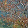 A  Autumn Colours  Open Subject  Honour   B Grade By   Keith Ryan